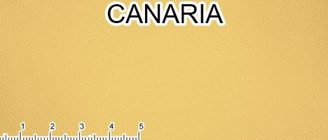 Pelle primo fiore giallo canarino